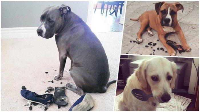 25 прелестных собак, которые очень сильно извиняются