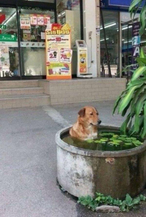 27 забавных животных, которые спасаются от жары, как могут