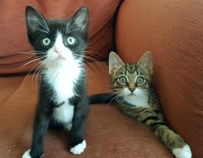 Фрог и Ньют – котята с врожденной аномалией