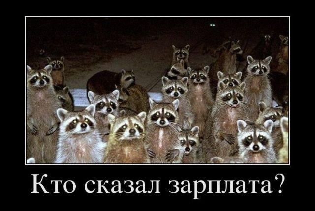 Демотиваторы (29.06.18)